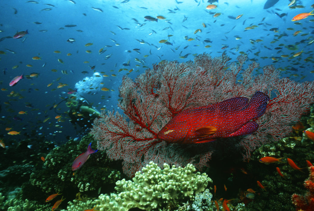 Scuba Diving Grouper on Reef 1 1024x688 - Why Scuba Diving is a Good Activity to Add to Your Travels